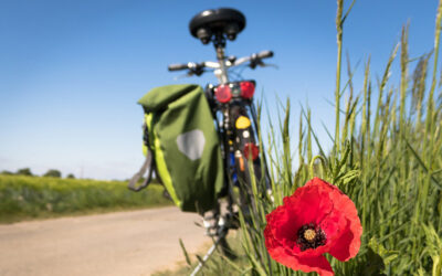 Servicios para amantes de la bicicleta